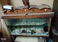 2حوض سمك بمشتملاتة