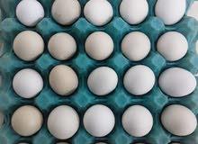 free range chicken egg