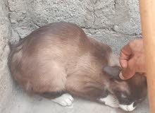 chat a vendre