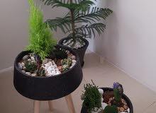 حدائق طبيعية مصغرة للمنازل
