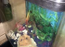 حوض سمك مع كامل اغراضه للبيع