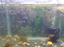حوض سمك البيع بلاش مع السمك