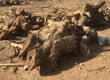 حطب سمر للبيع ناشف له اكثر من5سنوات قريب من حوطه بني تميم