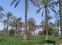 ارض للبيع مسجله ملك عقد ازرق على الطريق الصحراوي