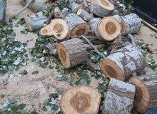 حطب شجر حور للبيع