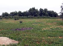 قطعة ارض بمنطقة العزيزية