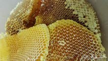 عسل جبلي سدر ممتاز طبيعي