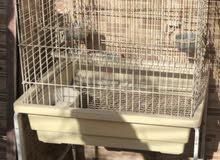قفص عصافير bird cage
