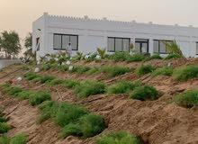 مزارع للبيع وللإجار مساحات متنوعة تتوفر الكهرباء والماء