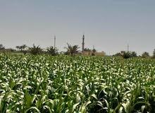 مزرعة 11فدان مسجلة عقد اخضر كاملة المرافق