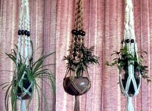 Natural and Artificial Plants for sale in New condition