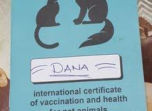 قطط هملايا شوكلت هاف بيكي فيس تقليب عااالي واخدين كل التطعيمات ومعاهم الشهاده الصحية