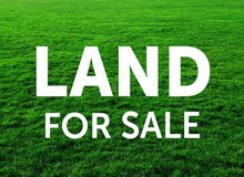 ارض للبيع في سيل الكرك 6دنمات بسعر 18الف فقط