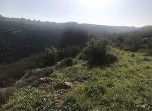 جبل للبيع في منطقة حميلة الجنوبية قرب منطقة حومين الفوقا السعر 1700000$