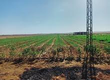 اراضي مستصلحة وجاهزة للزراعة .. قابلة للتجزئة حتى 10 فدان