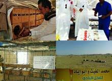 محمدالغيث.. لبيع النحل البلدي وأنواع العسل الطبيعي%