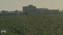 (هذا العقار بمصر )90فدان زراعية قابلة للتجزئة حتى 5فدان