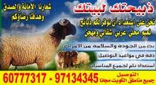 اغنام عربي نعيمي للبيع مع التوصيل مجانا 60777317 جميع مناطق الكويت