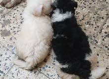 كلاب صغار عمر شهر