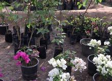 تنفيذ وتنسيق حدائق وديكور