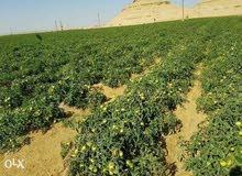 اراضي زراعية للبيع في الفيوم (موقع ابناء مصر الخير )