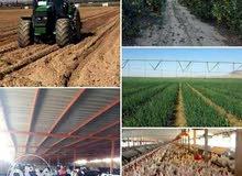 مزارع من 5 فدان علي الطريق الاقليمي بسعر لا يعوض