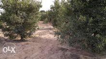ارض زراعية على طريق مصر الاسماعيلية