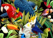 اريد طير التبني مدرب الفضل يكونون انثي وذكر ادخل وقراء تحت