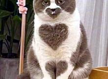 فندقة قطط