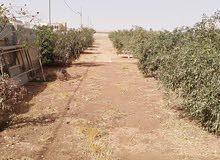 مزرعة مع فيلا 350 متر للبيع مساحة 5 دونمات 200 شجرة زيتون وسور طوب ارتفاع مترين