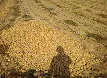 فرصه كبيرة لمحبى الاستثمار الزراعى  ارض مسجله على طريق مصر الفيوم ارايسي مباشرم