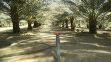 فرصة   مزرعة بولاية السنينة مساحة 37409 م2 للبيع