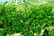 مزرعة 22 دونم للبيع - المشيرفة
