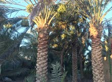 بستان للبيع بنخيل واشجار متعدده مثمره على شط كبير ونظيف