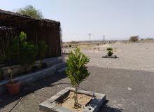 ارض زراعية للبيع 19 الف متر ب عبري عملاء