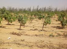 ارض مساحتها 73 فدان للبيع قابله للتجزئه