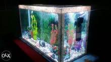 حوض سمك كبير غير مستعمل 1 متر للبيع