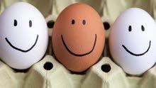 بيض عرب وابو ركيبة