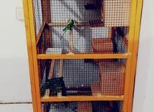 للبيع قفص للطيور