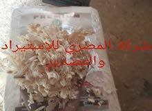 نشارة بالات للتصدير من شركة المصري للاستيراد والتصدير