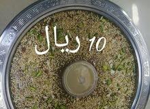 تمور لاهل الطيب وشغل مرتب يرجي التواصل  ع الواتساب رقم عمان موجود فالاعلان