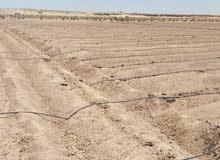 أرض زراعيه للبيع