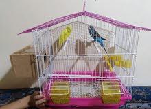 جوزين طيور حب مع القفص