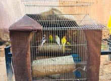 قفص عصافير