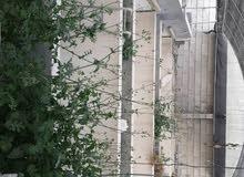 الايجار مزرعه في بوري