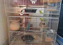 3 pairs of budgies and 1 pair of finches for rehome
