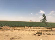 استثمر فلوسك الان واشتري مزرعه متكامله علي طريق رئيسى وقريبة من القاهرة