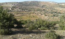 ارض للبيع 44 دونم 550 متر جرش