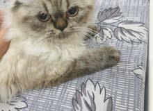 قطة بعمر 5 اشهر