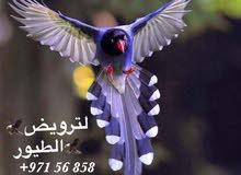 عبدالله يحيى لخدمات ترويض الطيور و البغبغاوات